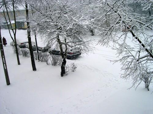 _sniezycapic01486