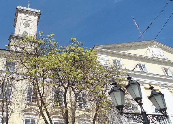 Zakwitły kasztany we Lwowie 3