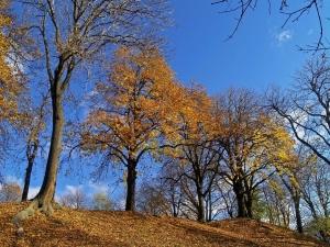 jesien w chełmie