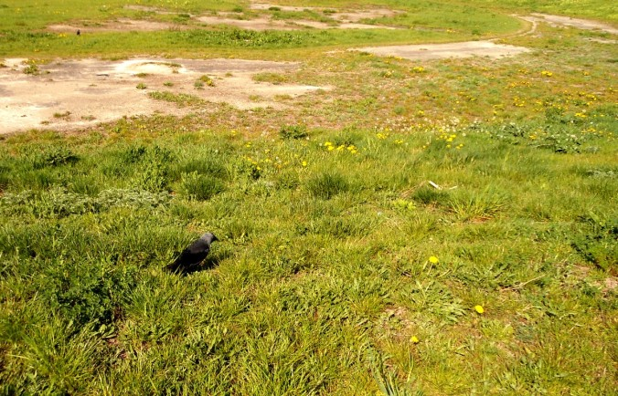 sucha trawa i ptak